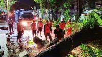 Personel Samapta Polda Sulut Evakuasi 2 Pohon Tumbang di Jalan Arie Lasut Manado